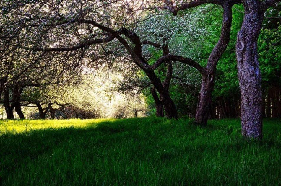 Photo du terrain de RURART avec arbres